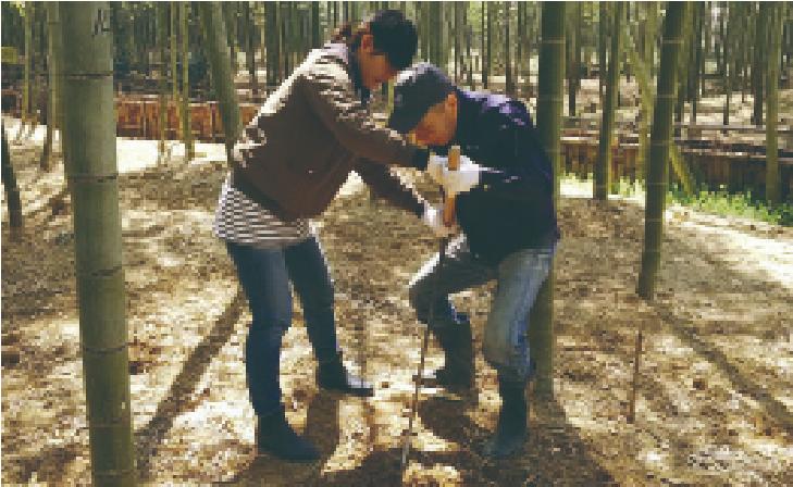 竹のカップペア